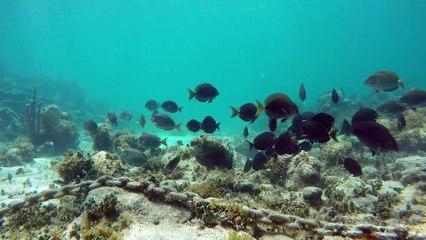 Antigua's Paradise Reef