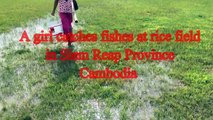 Wow! A girl catches a lot of fishes on rice field in Siem Reap Province - Hand Catching Fish