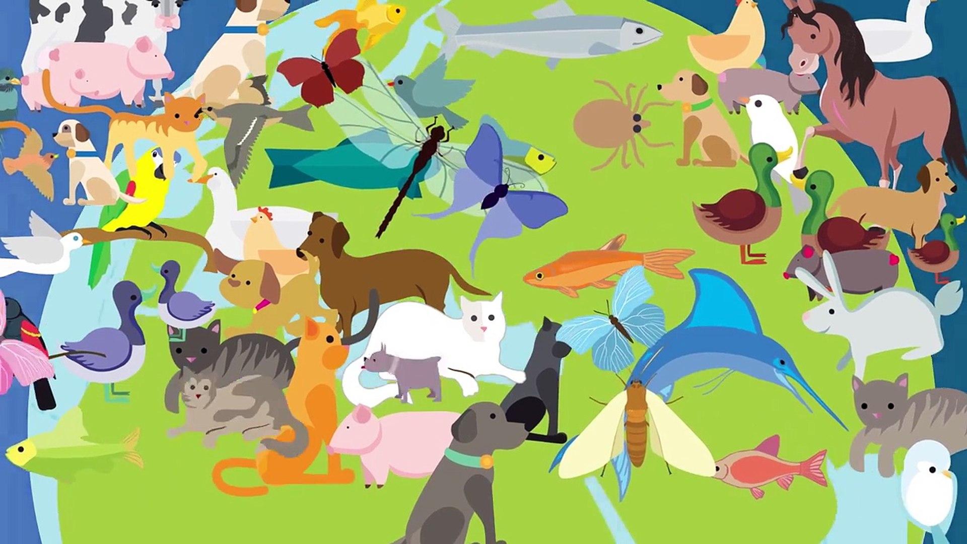 Animation: Companion Animal Vector-Borne Diseases