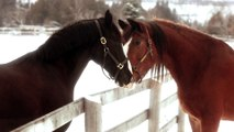 2016 Clydesdale Superbowl Commercial part3