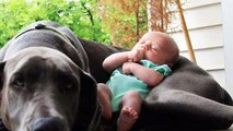 10 Dogs and Babies Who Are Adorable Best Friends