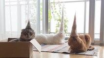 Il réalise des chapeaux en poils de chats
