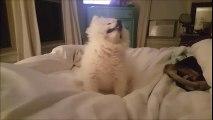 L'éternuement de ce petit chien est sans aucun doute le plus mignon jamais vu