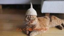Des chapeaux pour chats fait en poils de chats