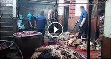 Men Caught Selling Dog Meat In Karachi shameful act of local