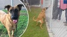 Anjing melihat keluarganya mencari anjing baru di penampungan hewan - Tomonews