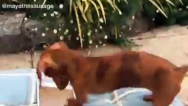 confused funny dog