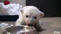 Toronto Zoo Polar Bear Cub Super Bowl
