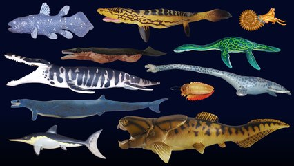 Prehistoric Sea Life - Dunkleosteus - The Kids' Picture Show (Fun & Educational Learning Video)