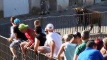 Lors d'une feria, un taureau défonce un 4X4
