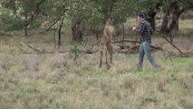 Cet homme met un coup de poing à un kangourou pour défendre son chien