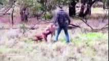 Un homme frappe un kangourou pour sauver son chien