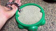 Un serpent joue dans un bac à sable