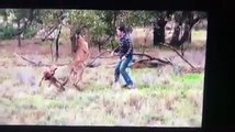 Un homme frappe un kangourou au visage pour sauver son chien