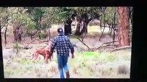 Un match de box entre un homme  et un kangourou
