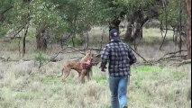 Homme Vs Kangourou : Il est prêt à tout pour sauver son chien