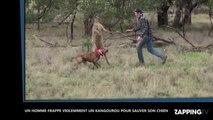 Un homme frappe violemment un kangourou pour sauver son chien, les images chocs (Vidéo)
