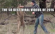 The 50 Best Viral Videos of 2016