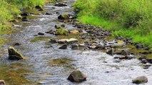 Eau et changement climatique dans le bassin Adour-Garonne
