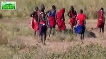 Most Amazing Wild Animals Attacks #40 Human attack Lion vs Leopard, Elephant vs Hyena