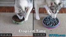 La gamelle anti-glouton pour empêcher votre chien de manger rapidement.