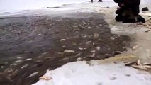 Обычная рыбалка на Сахалине