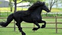 Il a été élu « le plus beau cheval du monde »