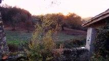 Pansette, coucher de soleil