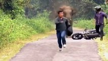 Os ataque de animais selvagens - animais selvagens - Elefante, crocodilo, zebra, leão, pitão p11