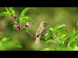 3 HOURS: Relaxing Piano and Bird Sounds - Birds Chirping, nature sound of birds singing