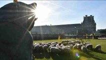 Ovejas pastan cerca del Louvre en París para protestar contra los lobos