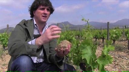 Insight into an organic winery