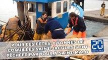 Pour les fêtes, 8 tonnes de coquilles Saint-Jacques sont pêchées par jour à Saint-Malo