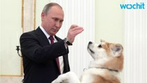 Putin Plays With His Dog Yume Before an Interview to Japanese Nippon Tv