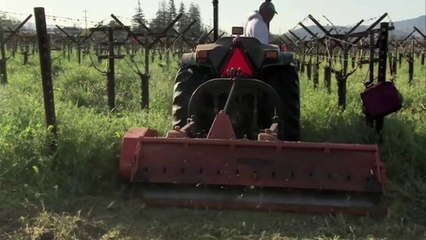 The Importance of Soil in Winemaking