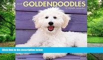 Goldendoodles like MILK !! Food porn - video dailymotion