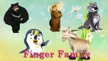 MASHA THE BEAR FINGER FAMILY SONGS | NURSERY RHYMES SONGS FOR KIDS | Nhạc Thiếu Nhi Vui Nhộn Cho Bé