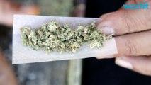 Legal-Marijuana Activists Celebrate Massachusetts Law