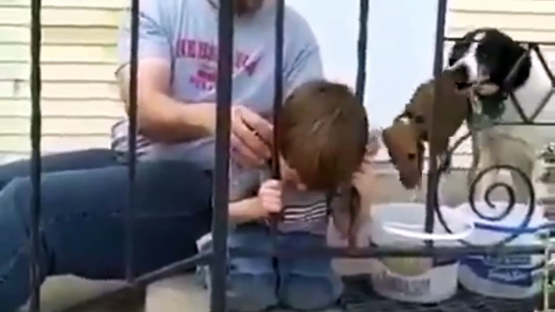 Funny kids, ultimate funny video