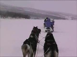 Trailer tour de chien
