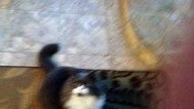 """""""Foi terrível"""" diz gata sobre a polemica da Viih Tube"""
