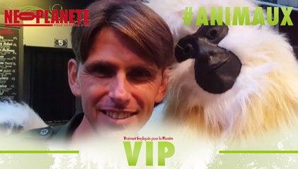 [VIP] Chanee : message d'un gibbon à Paris !