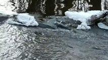 Environnement : Pollution de l'eau dans les Côtes-d'Armor
