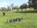 Marius et l'obstacle de pneus