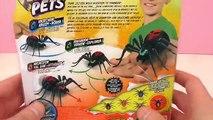 Epouvantable araignée Wild Pets – Une véritable araignée chez nous?! Notre Wolfgang - Démo