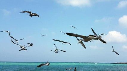 제주도코난풍경 - 바다갈매기의 힘찬 날개짓