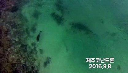 제주도코난드론 - 돌고래 를 담다