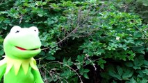 Kermit the Frog Rain Dance! Muppets Gone Wild Sesame Street Funny Toy Movie for Kids