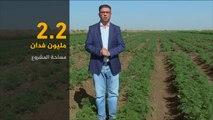 الاقتصاد والناس- مشروع الجزيرة السوداني كيف كان وكيف أصبح؟