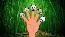 Finger Family Finger Family Panda Family Nursery Rhyme Animal Finger Family Bear Finger Family f